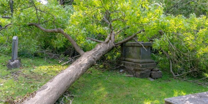 ולצמן לביטמן - נפילת עץ